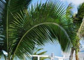mauricius-hotel-le-tropical-attitude-054.jpg
