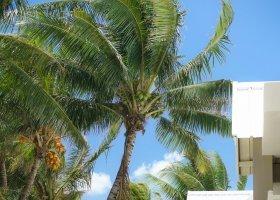 mauricius-hotel-le-tropical-attitude-121.jpg