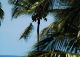 zanzibar-hotel-diamonds-mapenzi-beach-064.jpg
